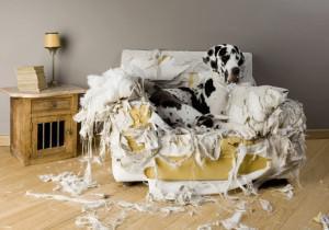 dog destroy house