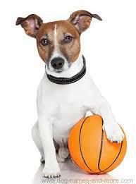 dog-basketball-dogsecret