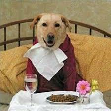 dog-eating-time