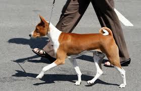 dog-heel
