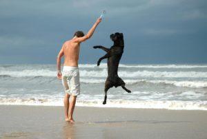 dog man sea