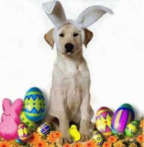 the_easter_dog