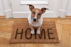 dog-training-at-home